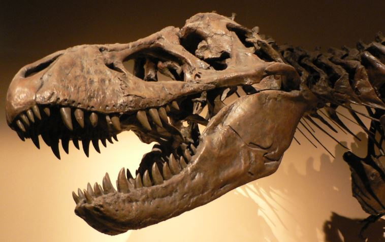 Not all dinosaurs are extinct: IBM's reinvention